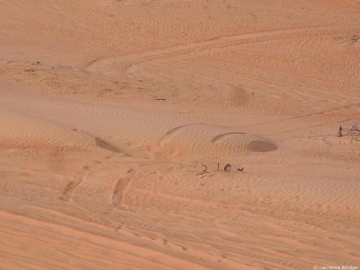 91ac67876296bb Oman 4x4 Gallery :: Bidaya Desert Challenge :: 60